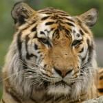 free zoo admission