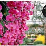 Longwood Gardens Admission ONLY $9 (Reg. $18)