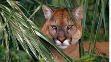 Elmwood Park Zoo Admission – 47% Off Regular Ticket Price