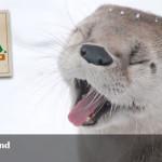 ZooAmerica Community Weekend: Free Admission Tickets 1/30 – 1/31/16