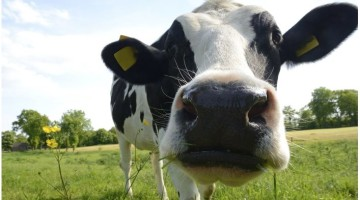 Kreider Farms: Dairy Farm Tour Tickets Up to 53% off Regular Price