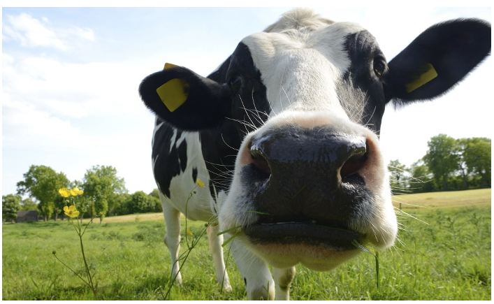 Kreider Farms: Dairy Farm Tour Tickets Up to 53% off Regular Price