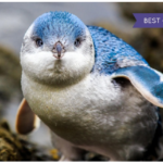 Adventure Aquarium 1-Year Family Explorer Annual Pass 33% off Regular Price