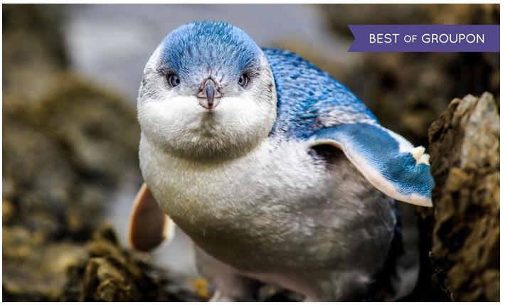 Adventure Aquarium 1-Year Family Explorer Annual Pass 33% off Regular Price