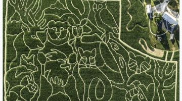 Oregon Dairy Corn Maze Admission Savings – 50% Off Regular Price