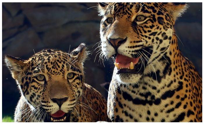 Elmwood Park Zoo Admission Membership 50% off Regular Price